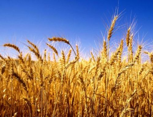 Izvješće o provedenom javnom uvidu u prijedlog Programa raspolaganja poljoprivrednim zemljištem u vlasništvu Republike Hrvatske